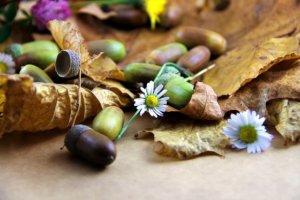 どんぐりと落ち葉と花