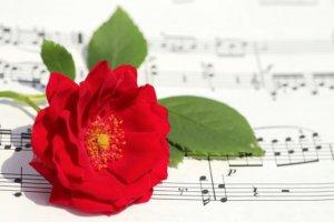 椿と楽譜の写真