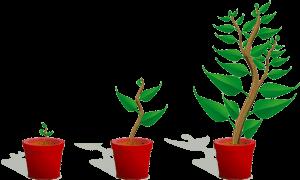 木が成長するイラスト